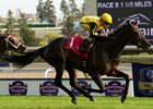 Champion Hansen Sold To South Korea Bloodhorse
