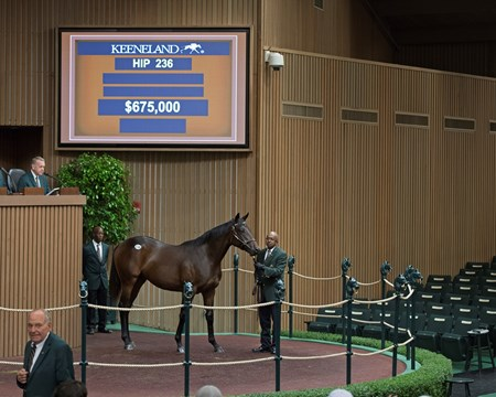 Hip 236 colt by Uncle Mo from Free Money at Lane's End brings $675,000. Keeneland sales scenes at Keeneland September yearling sale Sept. 12, 2017 in Lexington, Kentucky.