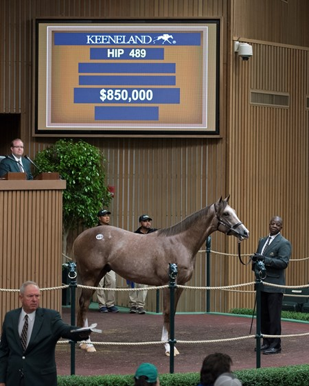Hip 489 colt by Violence from Melody Lady brings $850,000 Keeneland sales scenes at Keeneland September yearling sale Sept. 12, 2017 in Lexington, Kentucky.