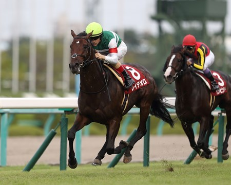 Rey de Oro wins the 2017 Kobe Shimbun Hai (G2)