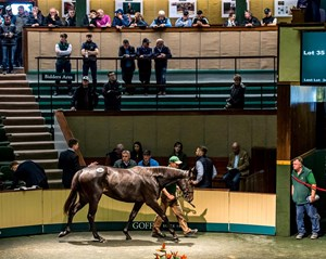 Lot 35, a filly by Galileo, topped the first day of the Goffs Orby sale