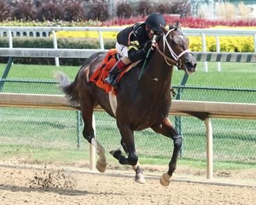 Bravazo Horse Profile Bloodhorse