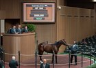 Hip 1846, colt by Will Take Charge out of Smart Believer brings $500,000