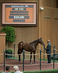 A Warrior's Reward filly, Hip 2702, was the co-highest price at the eighth session of the Keeneland September yearling sale