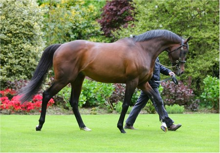 Camelot at Coolmore Stud in Ireland