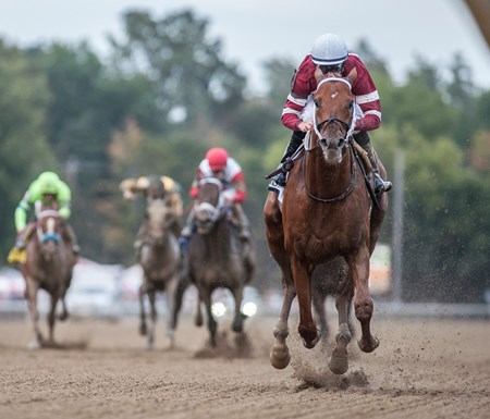 Gun Runner with jockey Florent Geroux aboard clearly outdistanced the field to win the 64th running of The Woodward presented by NYRA Bets Saturday Sept. 1, 2017 at the Saratoga Race Course in Saratoga Springs, N.Y.