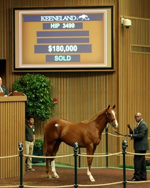 Hip 3499, a son of Violence, topped the 10th session of the Keeneland September sale Sept. 21