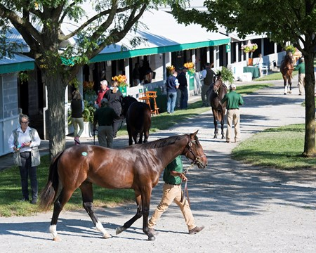 Hip 60 walking, colt by Kitten's Joy from Nereid at Lane's End consignment Keeneland September sales scenes. Sept. 8, 2017 in Lexington, Kentucky.