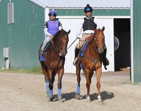 West Coast (left) ridden by Yeris Ortega is ponied back to the barn by Franklin De Jesus after having his first look at the track at Parx Racing in Bensalem, Pennsylvania on September 21, 2017