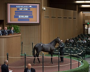 Hip 2196, a colt by Cairo Prince out of Precious Princess, brings $350,000 from Mike Ryan