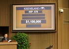 Hip 587, a Scat Daddy colt, sells for $1.1 million at the Keeneland September yearling sale