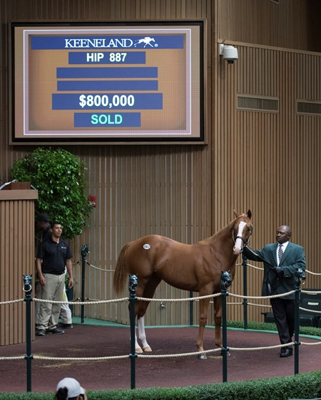Hip 887 colt by Curlin from Trensa brings $800,000 from Albaugh Racing Stable. Keeneland sales scenes at Keeneland September yearling sale Sept. 14, 2017 in Lexington, Kentucky.