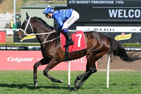 Winx wins the 2017 Colgate Optic White Stakes
