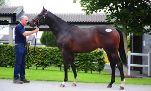 Lot 219, a son of Showcasing, was purchased by Grovendale Advisory Services