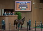 Hip 1041, a daughter of Scat Daddy out of the Ghostzapper mare Beloveda, brings $1 million