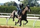 Limousine Liberal works over Keeneland's main track Sept. 30