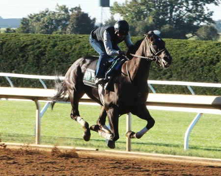 Limousine Liberal - Work - Keeneland - 09-30-17