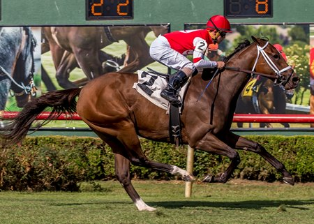 Lady O'Toole wins the Happy Ticket Stakes at Louisiana Downs