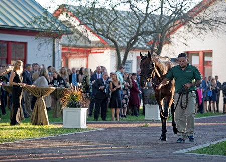 Optimizer during stallion parade TOBA awards dinner at Calumet. Sept. 9, 2017 in Lexington, Kentucky.