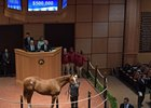 Hip 542, a colt by Violence, sells for $500,000