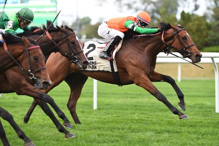 Rubilinda wins the Pebbles Stakes at Belmont Park