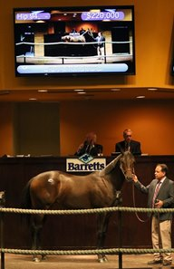Hip 94, a Smiling Tiger filly, sold for $220,000 at the Barretts October sale