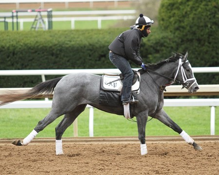 Stainless - Gallop - Keeneland - 10-25-17