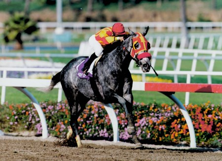 Skip Away wins the 1997 Breeders' Cup Classic