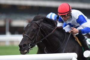 Blacktype is the co-highweight in the Tropical Turf Stakes at Gulfstream Park