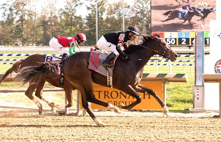 Limited View wins the 2017 Maryland Million Lassie Stakes
