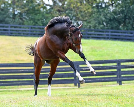 TAKE FLIGHT: Champion Songbird shows off in her paddock on a special fan day at Taylor Made Farm