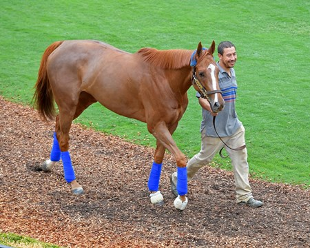 Stellar Wind Breeders' Cup horses on track at Del Mar racetrack on Oct. 31, 2017 Del Mar Thoroughbred Club in Del Mar, CA.