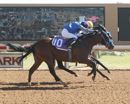 P J's Gold wins the 2017 New Mexico Classic Cup Juvenile Championship Stakes