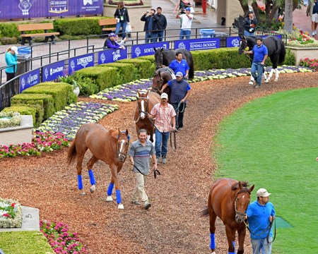 Stellar Wind schools in paddock (left front, chestnut) Breeders' Cup horses on track at Del Mar racetrack on Oct. 31, 2017 Del Mar Thoroughbred Club in Del Mar, CA.