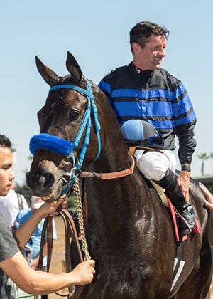 Blackjackcat, with Kent Desormeaux aboard, after winning the Obviously Mile at Santa Anita Park