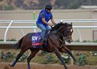 Imperial Hint is on the muscle as he gallops ahead of the Breeders' Cup at Del Mar