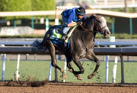 Arrogate puts in his last serious work before the Breeders' Cup Classic Oct. 23 at Santa Anita