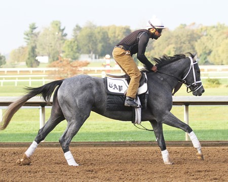 Stainless - Gallop - Keeneland - 10-10-17