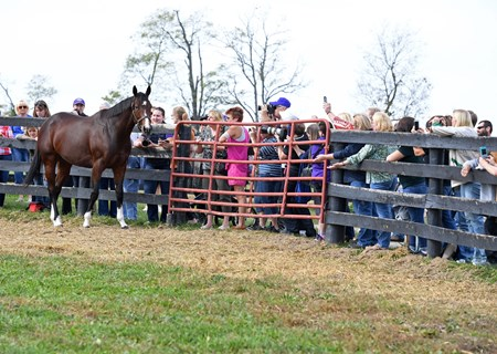 Songbird on fan day at Taylor Made Farm. Oct. 21, 2017 in Nicholasville, Kentucky.