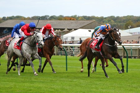 Roly Poly (right) ridden by Ryan Moore beating Persuasive (grey) 1st The Kingdom Of Bahrain Sun Chariot Stakes (Group 1) at Newmarket 7/10/17