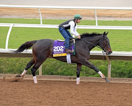 Elate Breeders' Cup horses on track at Del Mar racetrack on Oct. 29, 2017 Del Mar Thoroughbred Club in Del Mar, CA.