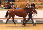 Lot 927, an Exceed and Excel filly, brought 500,000 guineas at the Tattersalls October yearling sale
