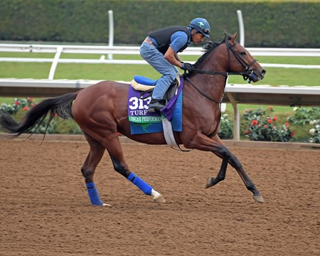Oscar Performance Breeders' Cup horses on track at Del Mar racetrack on Oct. 28, 2017 Del Mar Thoroughbred Club in Del Mar, CA.
