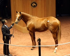 Hip 131, a Tapit filly out of Raffishing Look, sold for $250,000