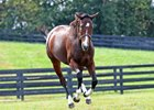 Songbird in late October at Taylor Made Farm