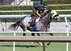 Hunt works over the turf at Santa Anita Oct. 22