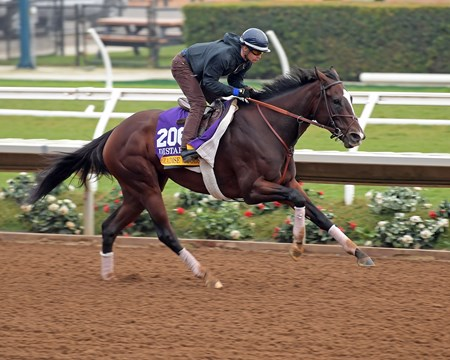 Paradise Woods Breeders' Cup horses on track at Del Mar racetrack on Oct. 28, 2017 Del Mar Thoroughbred Club in Del Mar, CA.