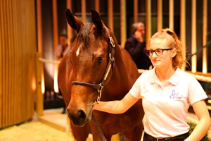 Lot 512 topped the Oct. 19 session of the Arqana October yearling sale