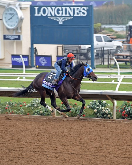 Hollywood Star with Tammy Fox Breeders' Cup horses on track at Del Mar racetrack on Oct. 28, 2017 Del Mar Thoroughbred Club in Del Mar, CA.