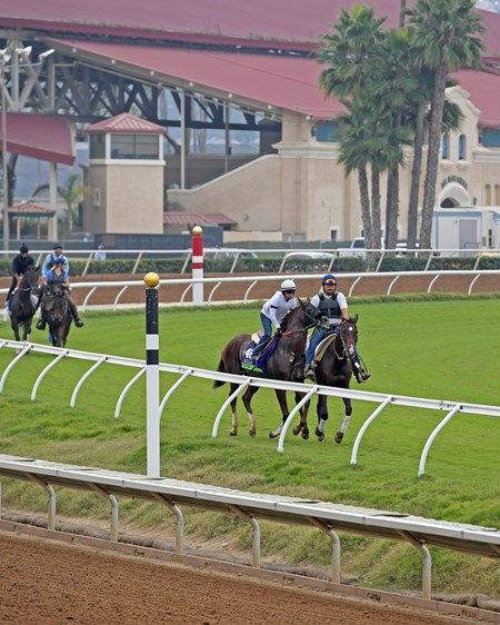 Om Breeders' Cup horses on track at Del Mar racetrack on Oct. 29, 2017 Del Mar Thoroughbred Club in Del Mar, CA.